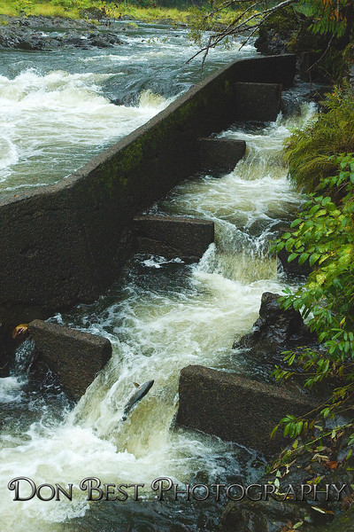 Nehalem Falls Fish Ladder #6193