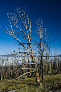 After a Forest Fire Atop Dunraven Pass in Yellowstone