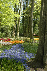 The Colors of Holland