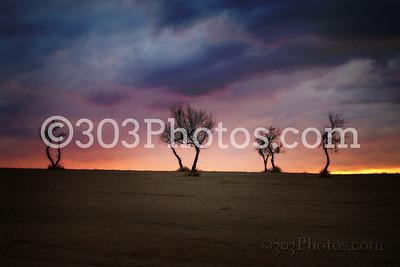 I35 Trees