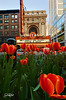 Spring On State...    Its been a crazy busy couple of weeks and haven't been able to get out and shoot much but yesterday was soo nice that I had to take an hour and spend some time with my camera outside of the studio. The colorful tulips in this small flower garden on state street made for a great juxtaposition against the Chicago Theater sign. It was soo nice to get out for a bit and im glad that it seems as if spring is here to stay!