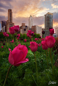 Lurie Garden Sunset...  Lurie Garden is just amazing during the spring here in Chicago. On this perfect evening, spring storm clouds rolled in just as the sun was setting and made for some amazing color in the sky!