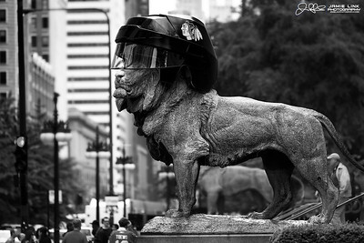 Hawks Lion...  The Lions in front of The Art Institute are sporting Hawks helmets in celebration of the Blackhawks making the Stanley Cup Finals. Lets Go HAWKS!!!!   Choose Chicago is looking for Chicago Blackhawks Fan photos. Submit yours for consideration to: photos@choosechicago.com