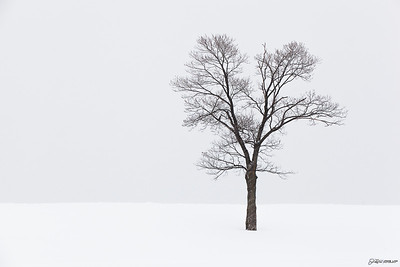 Tree in a Blizzard...