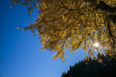 Herbst im Allgäu auf der Wanderung durch die Starzlachklamm, Schwaben, Oberallgäu