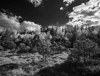 Lichte Wälder im Mornauer Moos nahe dem Bohlenweg, Oberbayern, Bayern, Deutschland