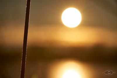 Sonnenaufgang am Sandner Baggersee mit Eiskristallen an einem Schilfhalm, Bayern, Deutschland