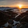 Sunset Sandhornet
