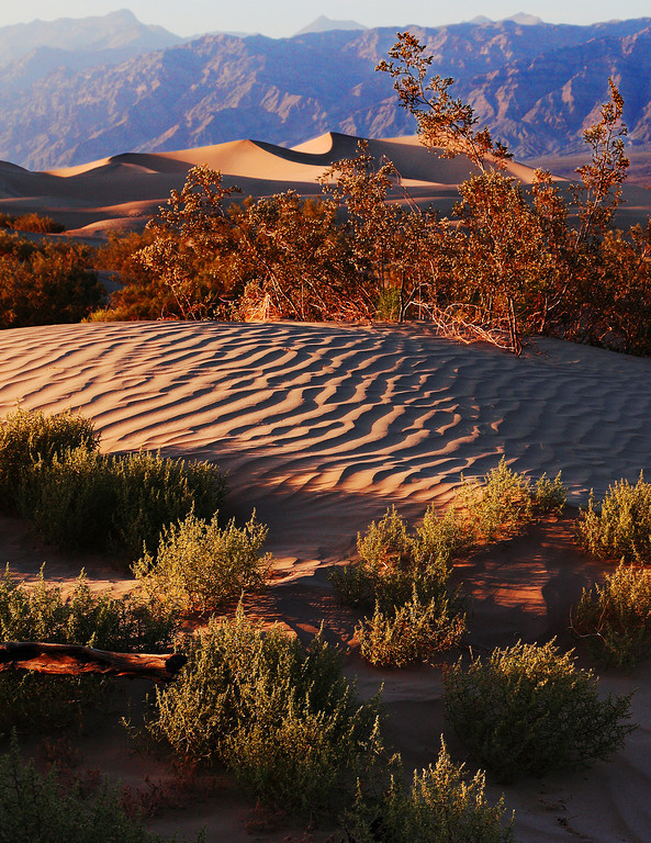 Mesquite Dunes - Death Valley Sand Dunes