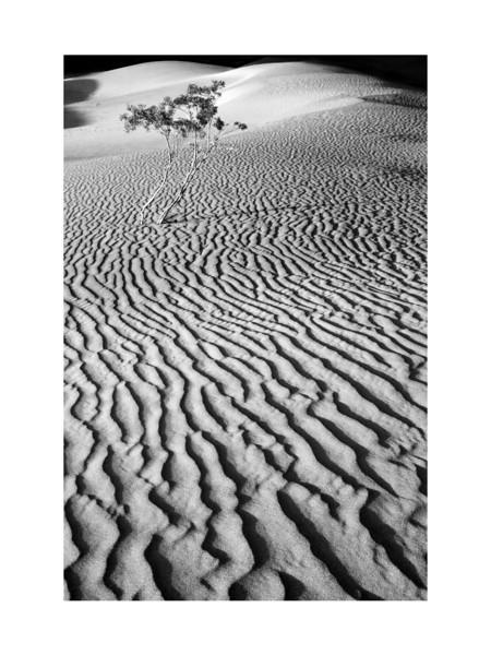 Last Light - Mesquite Dunes, Death Valley.