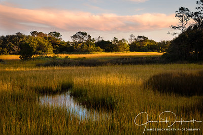 Coastal Marshes