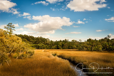 Marsh along the Georgia Coast