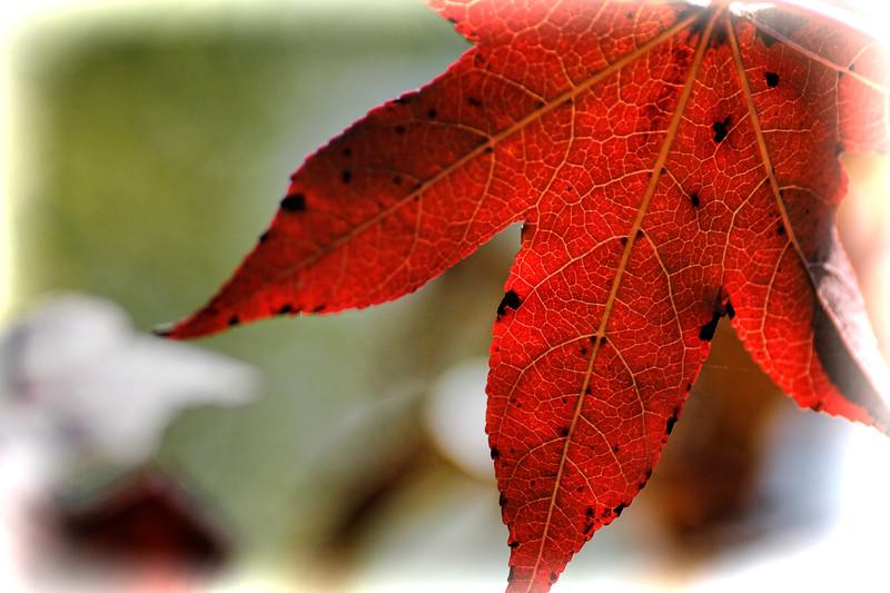 Fall Vision