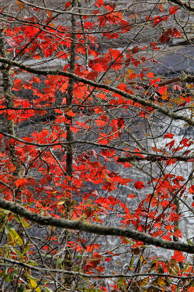 Red Leaves and Water