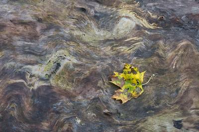 Tree Trunk Leaf