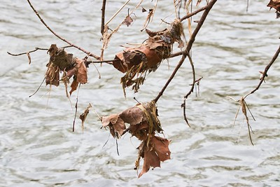 Mad River / Hanging Leaves