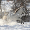 DH-5098K Snow Gallop