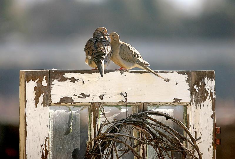 Doves On Door