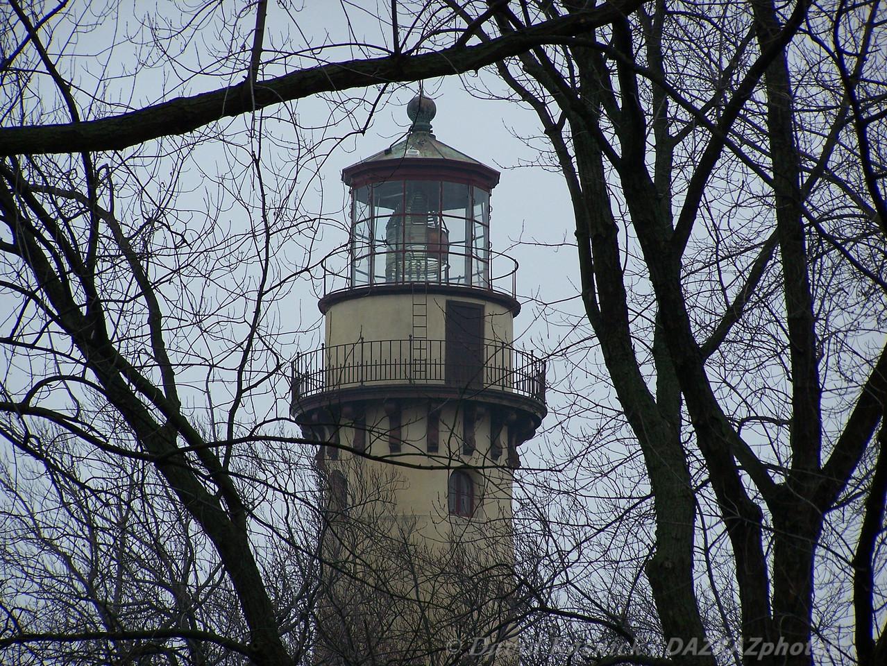 Light Through The Trees - Evanston, IL