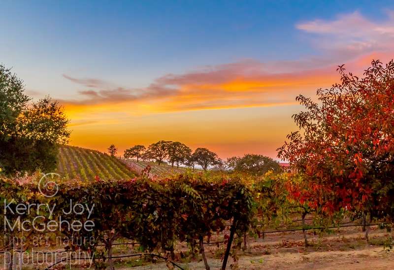 Sunset at Bent Creek Vineyards