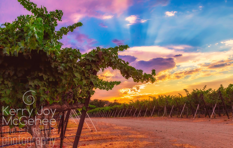 Purple Sky at Rubino Winery