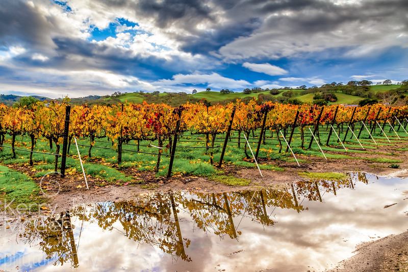 Vineyard Reflection