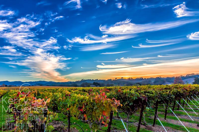 Painted Sky Over Rubino Vineyards