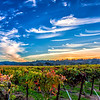 Painted Sky Over Rubino Vineyards