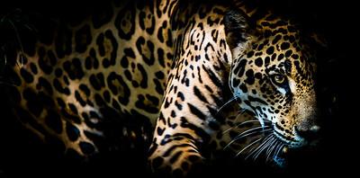 Papa Jaguar