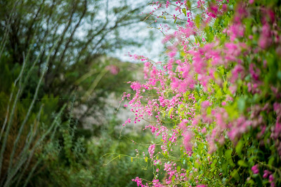 Spider Web and Pink Flowers