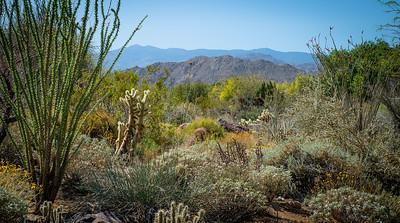 Desertscape 6