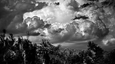 Desert Storm B&W