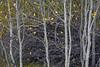 gumdrop grove
