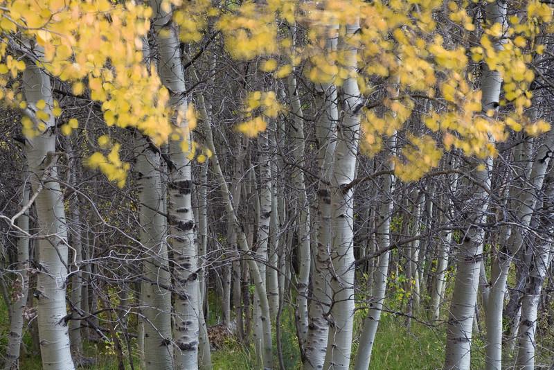 rustling grove