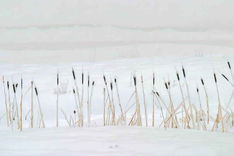 ochoco snow