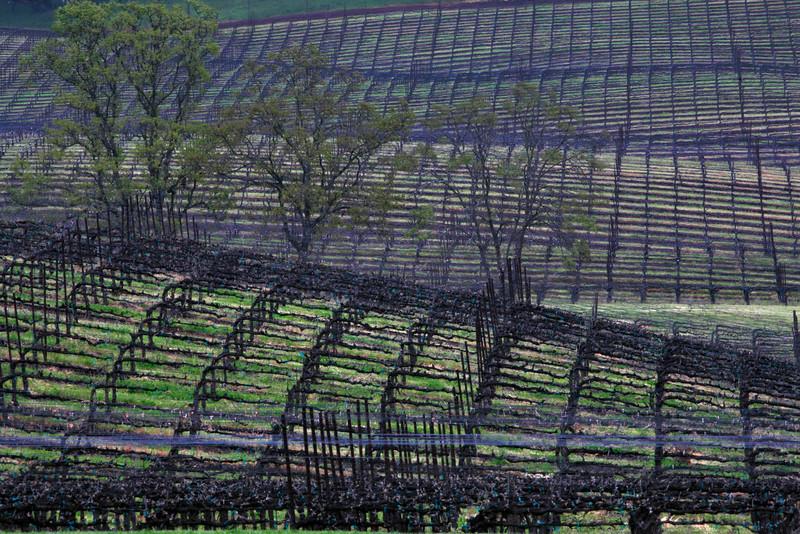 three trees & a vineyard