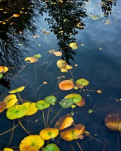 VanDusen Botanical Garden Vancouver, British Columbia