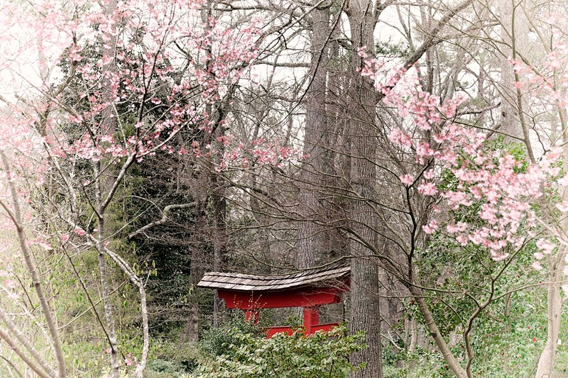 Springtime at the japanese gardens