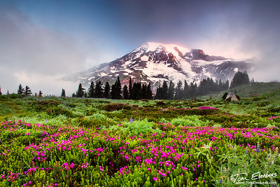 Mt. Rainier Sunrise, Mt. Rainier N.P.