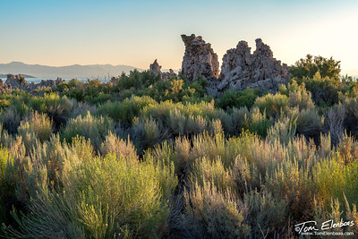 Back-lit shrubs at MonoLake