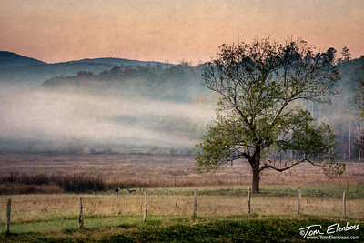Cade's Cove Dawn, Great Smoky Mountains N.P.