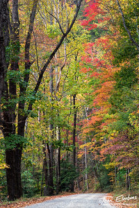 Tremont Road, Great Smoky Mountains N.P.
