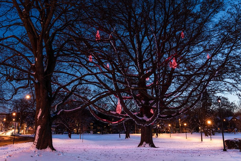 Holiday Lights at Deering Park after the Snow