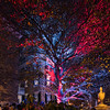 Lighting of the Copper Beech Tree at PMA