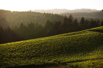 Vineyard Slopes