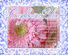 Cornflower16x20-2