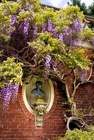 Wisteria, Old Westbury Gardens, Long Island