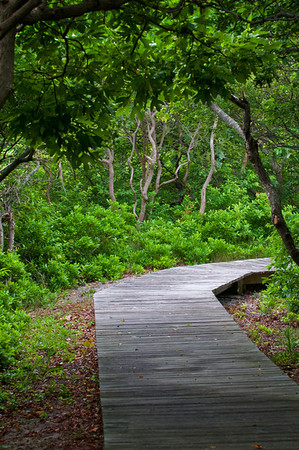 Fire Island Boardwalk, National Seashore
