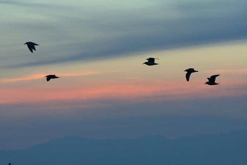 Bird silhouettes and sunset sky from Marina Park, San Leandro, CA