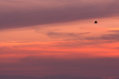 One bird at sunset from Marina Park, San Leandro